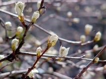 Tree. Spring tree Stock Image