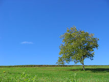 Tree. Green Tree Landscape Royalty Free Stock Photography