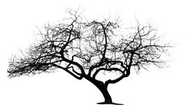 Tree. Silhouette stock illustration