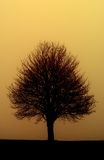 Tree. Standing at sunset on a field Royalty Free Stock Photos