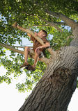 Tree. Happy boy sitting high up in the branches of a tree he has climbed Stock Photos
