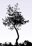 A tree Royalty Free Stock Photography