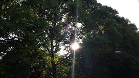 Tree2 Stockbild