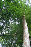 Tree. S in the tropical rainforest stock photography