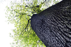 Tree. Gigantic tree in the wood Stock Photo