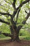 Tree. Close up of a green tree Stock Photo