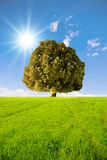 The tree Royalty Free Stock Image