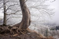 A tree above the cliff Royalty Free Stock Photography