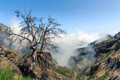 Tree above the clouds Stock Image