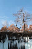 Tree above Icicles of frozen waterfall Stock Photography
