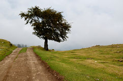 Dirt Road Lone Tree Royalty Free Stock Images