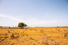 Tree above the Pond in the middle of Savanna stock image