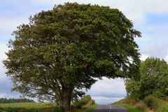 Tree above the road royalty free stock image