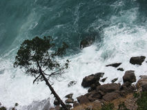 Tree above the waves Royalty Free Stock Photography