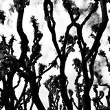 Tree abstract. Artistic look in black and white. Stock Photos