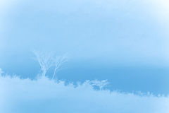 Tree abstract background Royalty Free Stock Image