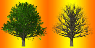 Tree  on abstract background, 3D Illustration. Tree with leaves and leafless tree  on abstract background Stock Photo
