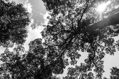 The tree abstract background. Tree and sky, black and white Stock Photo