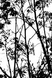 Tree abstract black and white Stock Photo