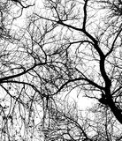 Tree Stock Images