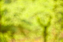 Tree Abstract. Impressionist photo abstract blur of  spring tree Royalty Free Stock Image