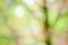 Tree Abstract. Impressionist photo abstract blur and of spring tree stock photos