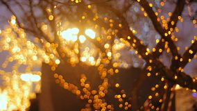 A tree adorned with light garlands. A festive evening in the city stock video footage