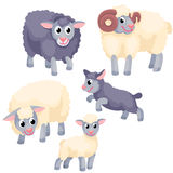 Tree adult sheep with two young lambs on the white background Royalty Free Stock Image