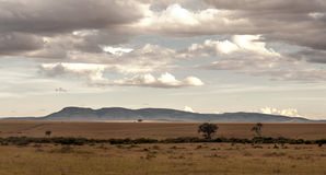 Tree on the African savannah Stock Images