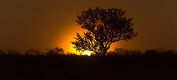 Tree in african sundowner. A silhouette of a tree in the african sundown Royalty Free Stock Image