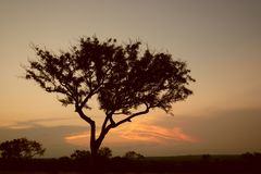 Tree in African sunset Stock Images