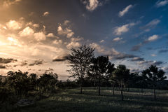 Tree against beautiful blue sky and clouds with sunlight over tr Stock Images