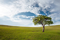 Tree against the blue sky Royalty Free Stock Photography