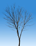 Tree. Against a blue sky background Royalty Free Stock Image