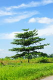 A tree against cloudy blue sky on Lazarus Island Royalty Free Stock Photography