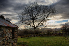 A tree against a dark grey moody sky in snowdonia Stock Images