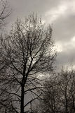 A tree against a dark sky Stock Images