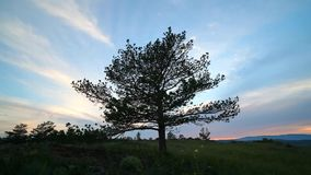 A tree against the evening summer sky stock video footage