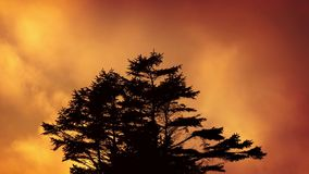Tree Against Fiery Evening Sky stock footage