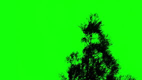 Tree against a green screen. Chromakey stock video