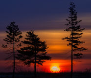 Tree against the morning sun. Breaking Dawn. Stock Photos
