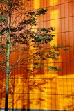 Tree against orange background. In Manchester Royalty Free Stock Photos