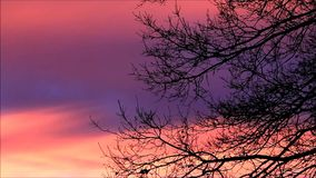 Tree against orange red sky. Beautiful landscape, tree against orange red sky stock video footage