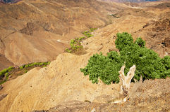Tree against red mountains, landscape Royalty Free Stock Photo