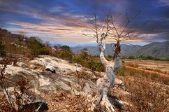 Tree against the rocky slopes Royalty Free Stock Photos