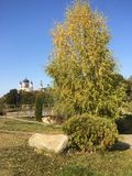 Tree against the sky. Tree on the background of the monastery, clear sky royalty free stock photo