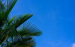 Tree against the sky Stock Photography