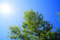 Tree against the sky Royalty Free Stock Images