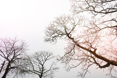 Tree against the sky with sunbeam Stock Image
