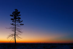 Tree against the sky with sunset. Royalty Free Stock Photos
